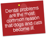 Dental problems are the most common reason dogs & cats become ill.